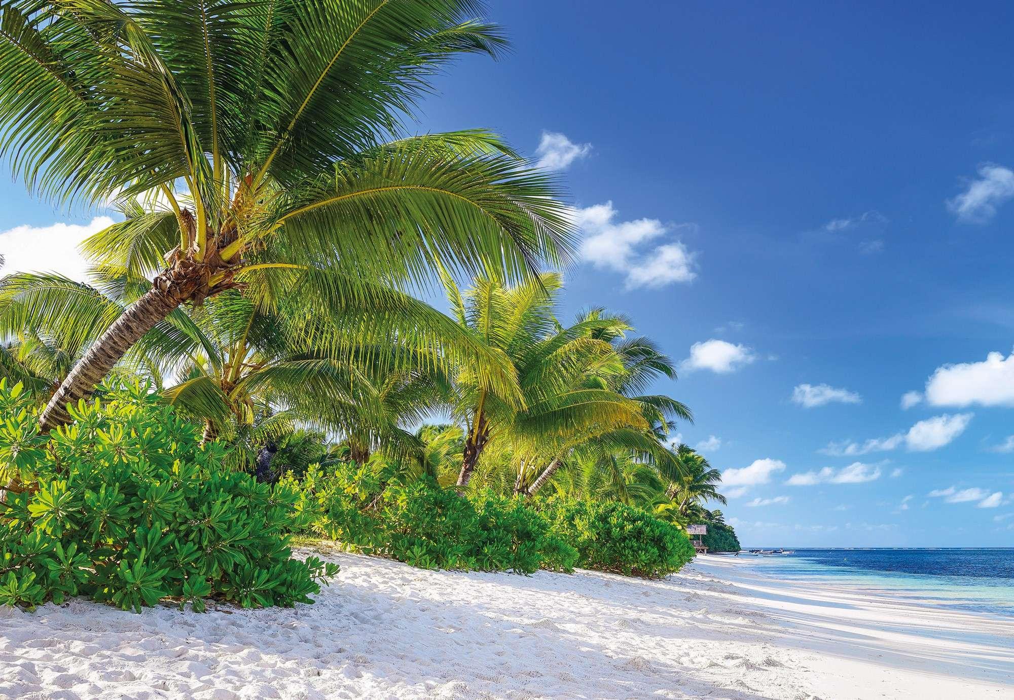 пальмы природа картинки ромашек нарвав букет